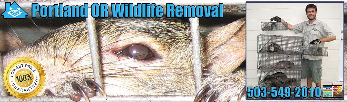 Portland Wildlife and Animal Removal
